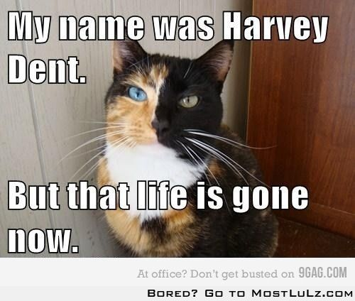 Harvey Dent Cat LuLz