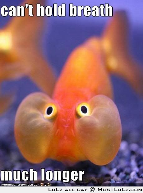 Silly fish LuLz