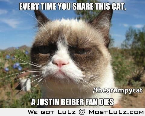Grmupy Cat sharing kills beiber fans LuLz