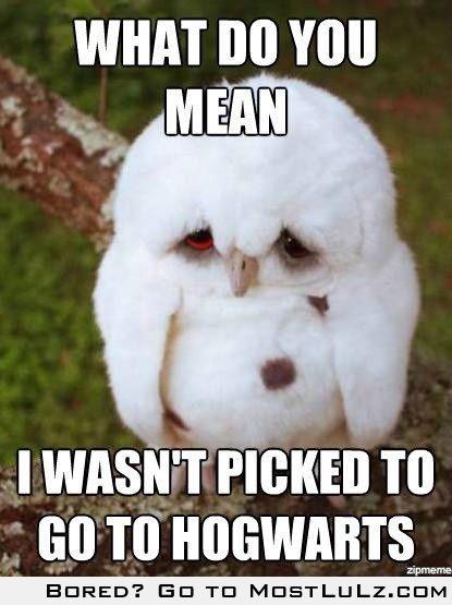 Sad owl is SAD LuLz
