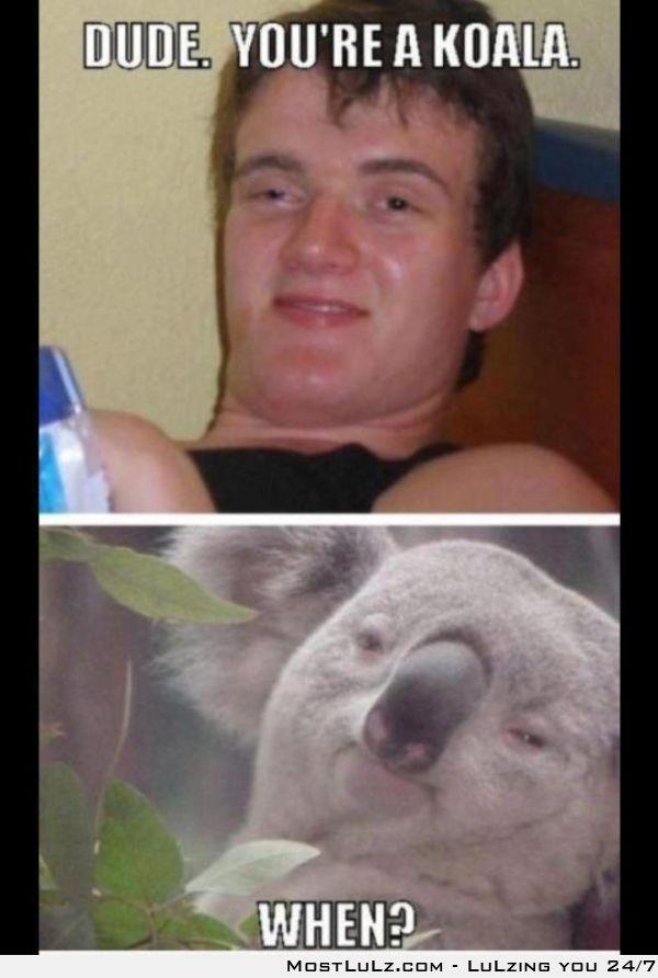 Koala Dude LuLz