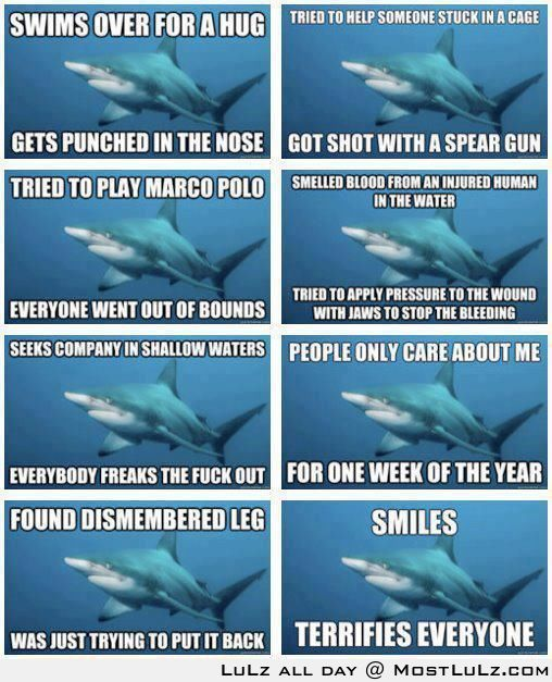 Sharks are Just so Misunderstood LuLz