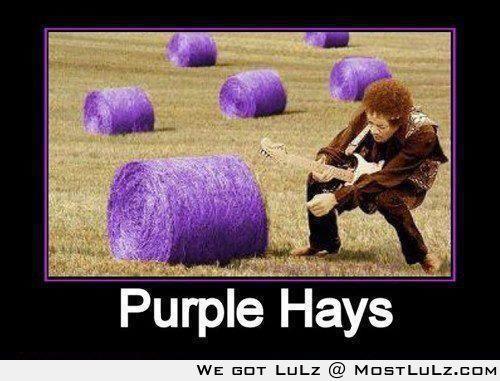 Purple Haze LuLz