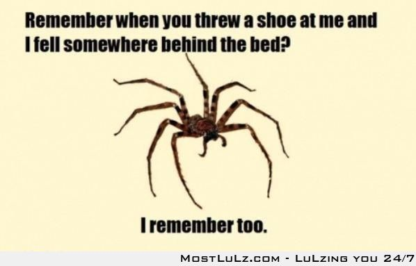 Spiders never forget LuLz