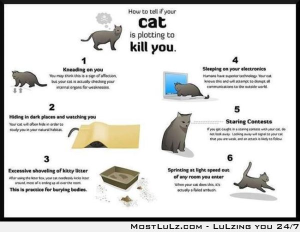 Cats are plotting to kill you LuLz