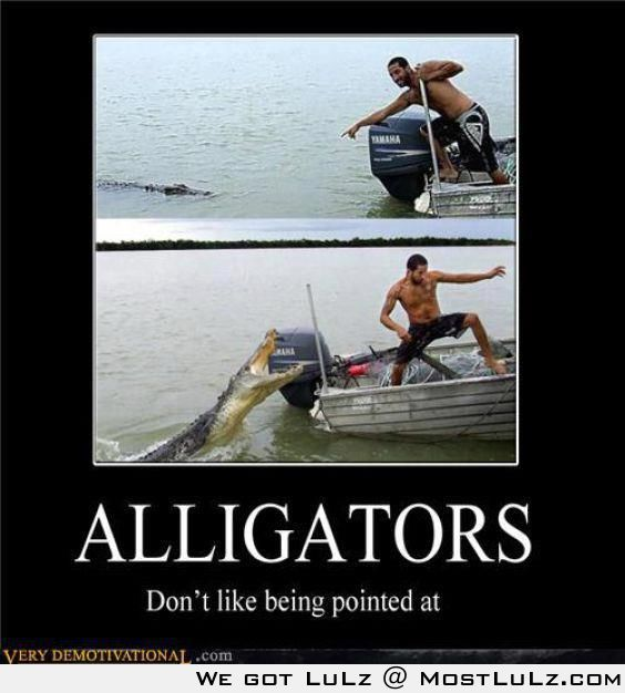 Don't point at the gators LuLz