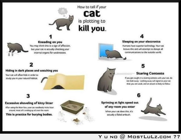 Is your cat trying to kill u?