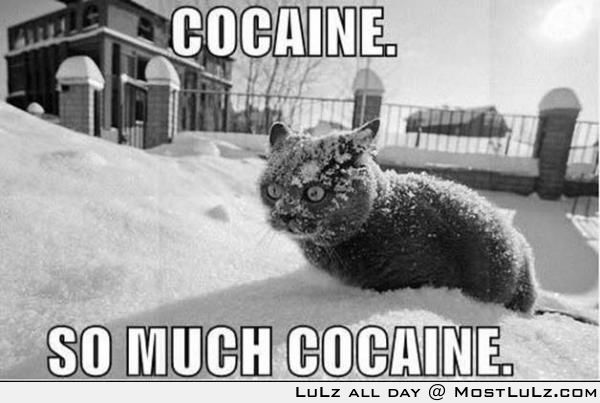 Charlie Sheen's cat