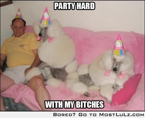 oh yes I luv party bitches LuLz
