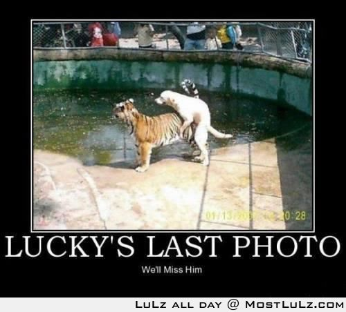 Lucky Dog WIN LuLz