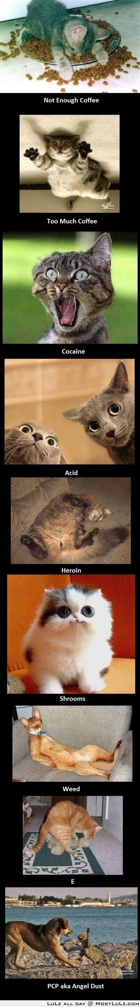 Drugs, this is what they do LuLz