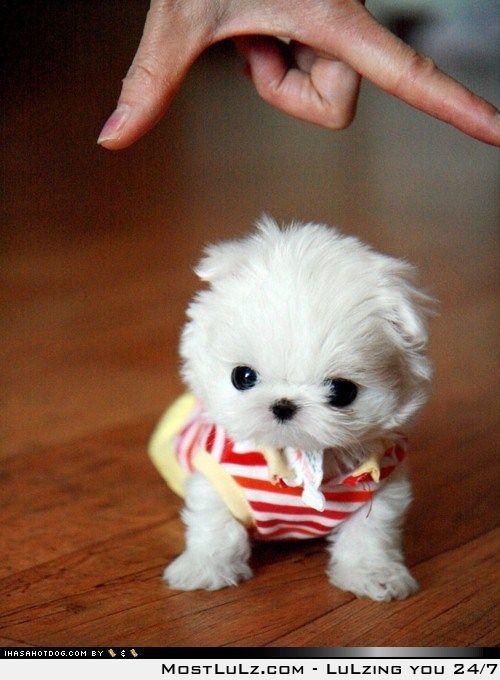 So cute I want one!