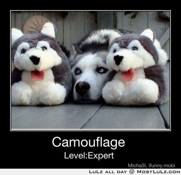 Expert Level LuLz
