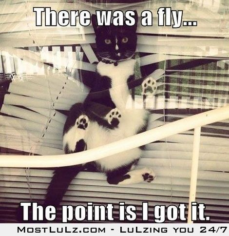 There was a fly...lulz