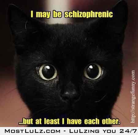 Schizo cat LuLz