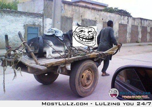 Donkey ride LuLz