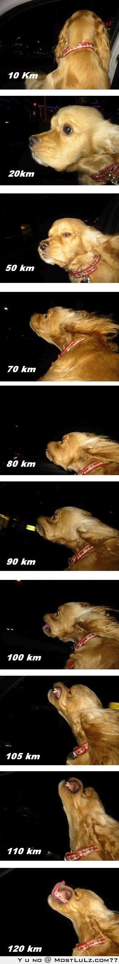 Dog Speedometer LuLz
