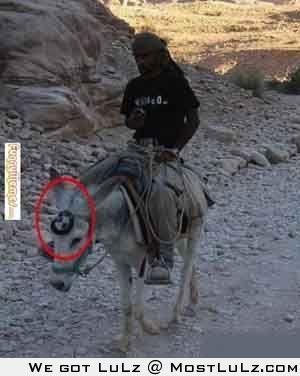 Donkey BMW