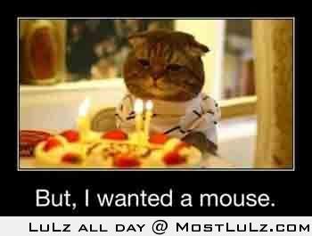 Cat's Brthday Wish